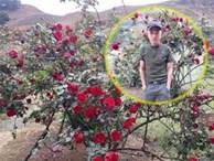 Lời kể đau nhói lòng của chàng trai dân tộc Thái bị trộm cây hồng cổ 20 năm tuổi