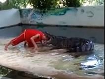 Thót tim với pha biểu diễn xiếc bị cá sấu ngoạm đầu