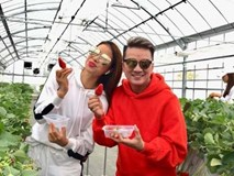 Đàm Vĩnh Hưng cùng Phạm Hương, Lệ Hằng hào hứng thăm quan vườn dâu tây Nhật Bản