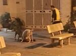 Bé trai 21 tháng tuổi bị chó nhà tấn công biến dạng vùng mặt-3