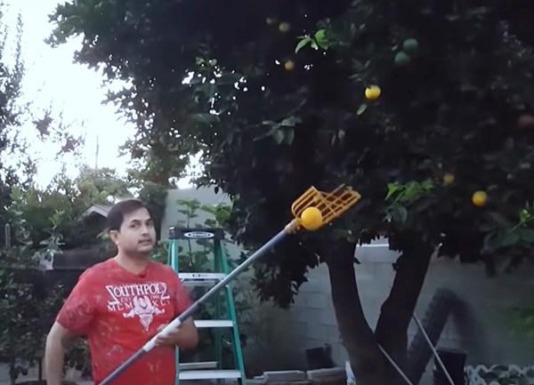 Trước dịch kiếm 160-230 triệu/tháng giờ Đức Tiến ở nhà làm vườn, thu hoạch quả trong biệt thự-5