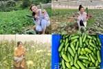 Lý Nhã Kỳ thu hoạch trái cây, hoa và rau củ trong khu vườn 50 ha ở Đà Lạt