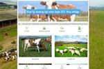 Tin vào 'chủ trang trại ở nước ngoài', hàng nghìn người 'nuôi bò online' sập bẫy đa cấp, mất trắng hàng trăm triệu đồng