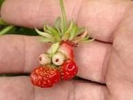 Phì cười trước những khoảnh khắc bá đạo của rau, củ, quả