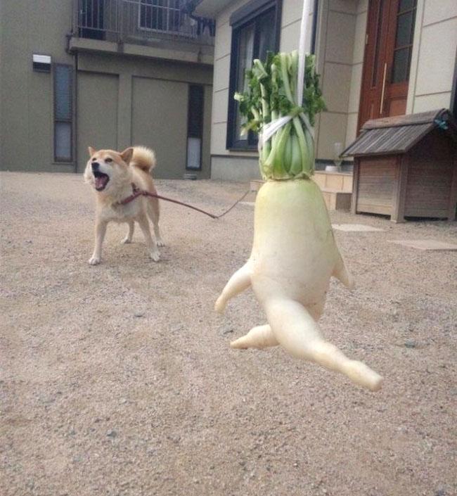 Phì cười trước những khoảnh khắc bá đạo của rau, củ, quả-7