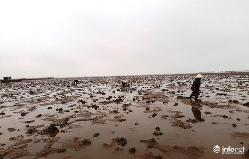 Loại cá kỳ dị nhất hành tinh được nhiều ngư dân săn bắt ở biển Thanh Hóa-1