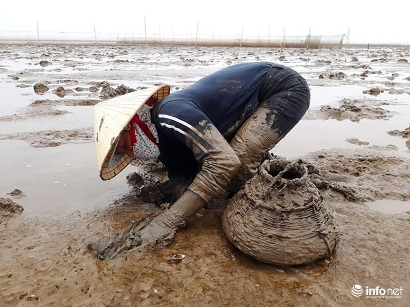 Loại cá kỳ dị nhất hành tinh được nhiều ngư dân săn bắt ở biển Thanh Hóa-3