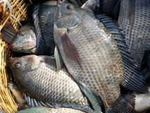 Danh sách 11 loại cá chứa nhiều chất dinh dưỡng có lợi cho sức khỏe