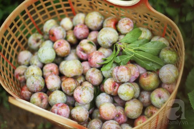 Những loại quả chua dân dã nhưng đã gieo tương tư cho biết bao thế hệ-8