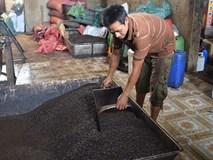Sốc: Phát hiện nhiều mẫu cà phê bột không có… cà phê ở Đắk Nông!