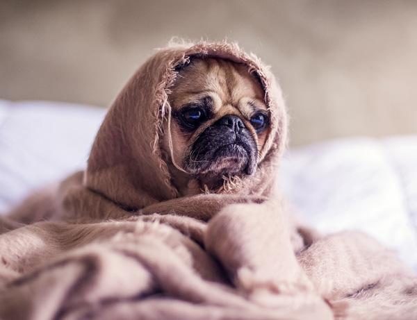 Khỏa thân khi đi ngủ có thực sự tốt như chúng ta vẫn nghĩ?-11