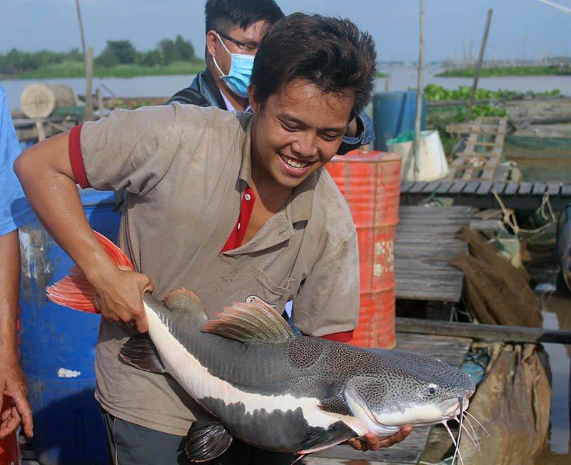 'Thuỷ quái' miền Tây: Ngàn con cá trê hồng đột biến gen kỳ lạ-8