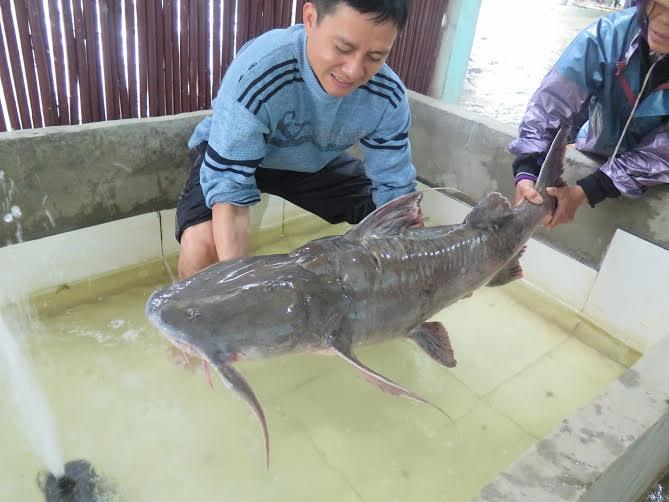 Quái ngư sông Đà và những cuộc vật lộn ly kỳ giữa người và cá-6
