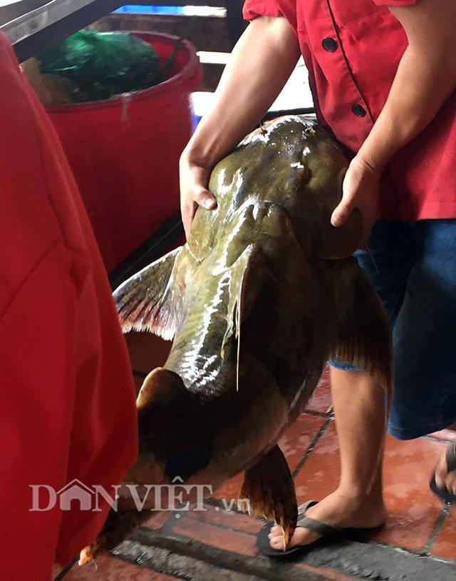 Quái ngư sông Đà và những cuộc vật lộn ly kỳ giữa người và cá-8