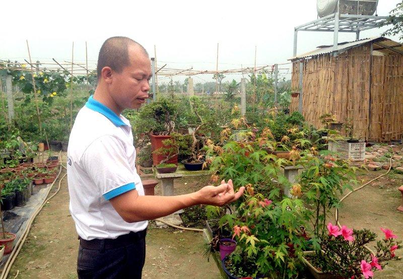Độc nhất Việt Nam: Lão nông sở hữu hàng ngàn cây phong lá đỏ-5