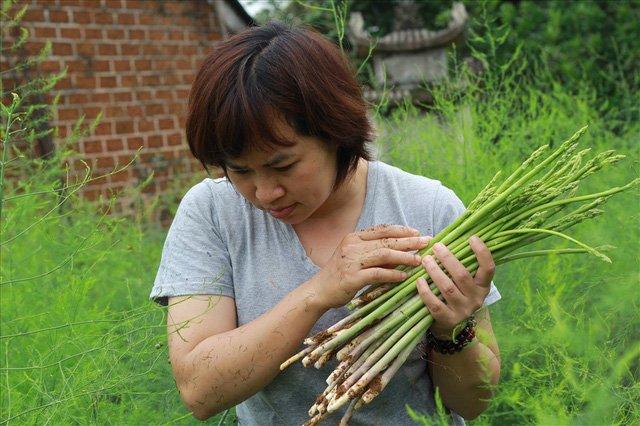 Bỏ công ty riêng về trồng măng tây, thu đều 2 tỷ vào túi-2