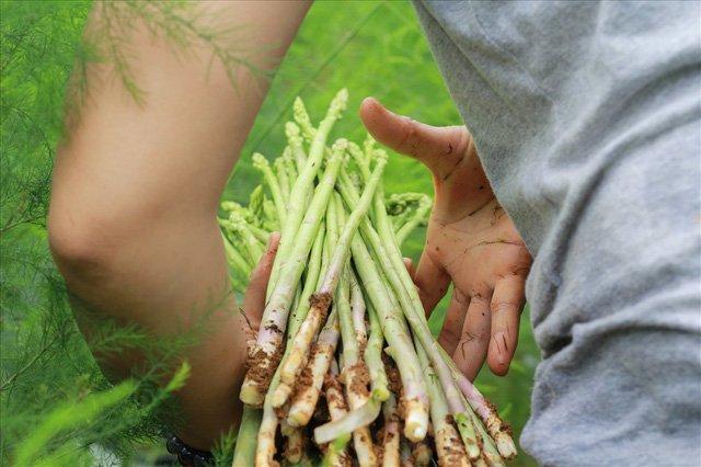 Bỏ công ty riêng về trồng măng tây, thu đều 2 tỷ vào túi-5