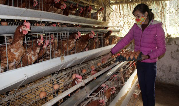 Nuôi gà siêu trứng kiểu ấm đông, mát hè kiếm trăm triệu mỗi năm-1