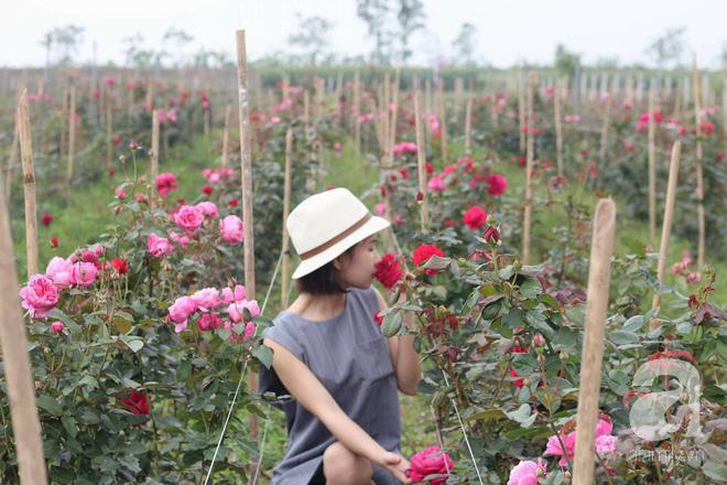 Ngắm khu vườn hoa hồng đẹp ngất ngây đã giúp cô gái thoát khỏi bệnh trầm cảm ở Hà Nội-1