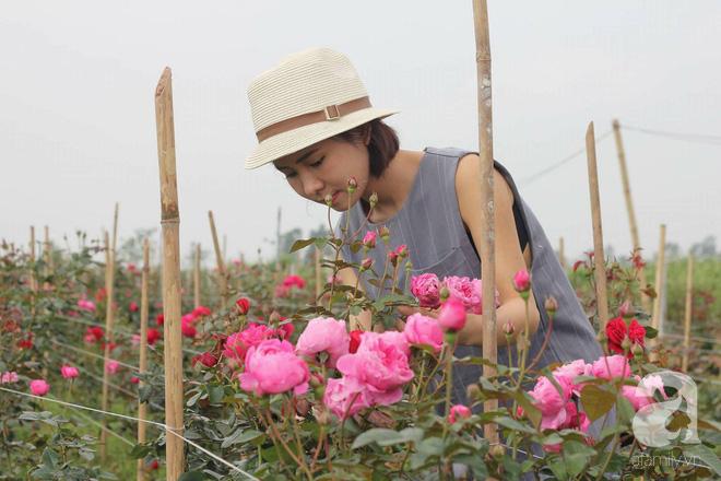 Ngắm khu vườn hoa hồng đẹp ngất ngây đã giúp cô gái thoát khỏi bệnh trầm cảm ở Hà Nội-2