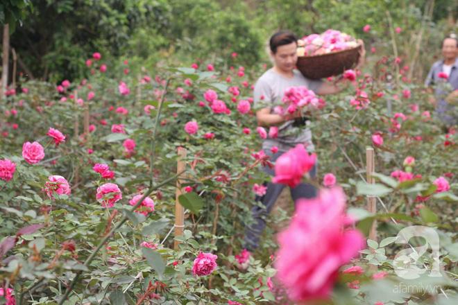 Ngắm khu vườn hoa hồng đẹp ngất ngây đã giúp cô gái thoát khỏi bệnh trầm cảm ở Hà Nội-5