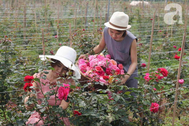 Ngắm khu vườn hoa hồng đẹp ngất ngây đã giúp cô gái thoát khỏi bệnh trầm cảm ở Hà Nội-7