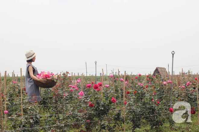 Ngắm khu vườn hoa hồng đẹp ngất ngây đã giúp cô gái thoát khỏi bệnh trầm cảm ở Hà Nội-9