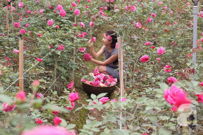 Ngắm khu vườn hoa hồng đẹp ngất ngây đã giúp cô gái thoát khỏi bệnh trầm cảm ở Hà Nội-13