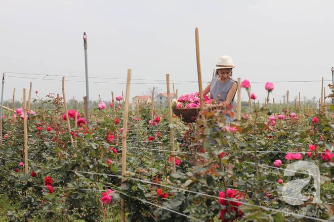 Ngắm khu vườn hoa hồng đẹp ngất ngây đã giúp cô gái thoát khỏi bệnh trầm cảm ở Hà Nội-15