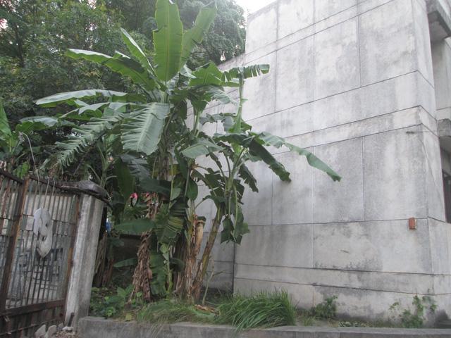 """Cận cảnh ngôi nhà ma"""" số 300 Kim Mã sau gần 30 năm bỏ hoang-6"""