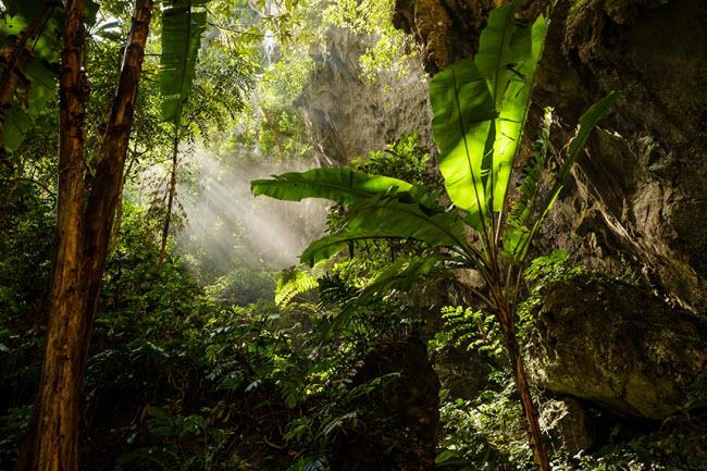 Bên trong những hang động đẹp ngoạn mục ở Việt Nam được báo Anh ca ngợi-5