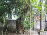 Ly kỳ quanh cây sưa trăm tỷ ở Hà Nội sắp được bán: Tờ giấy đe dọa ném vào nhà dân-3
