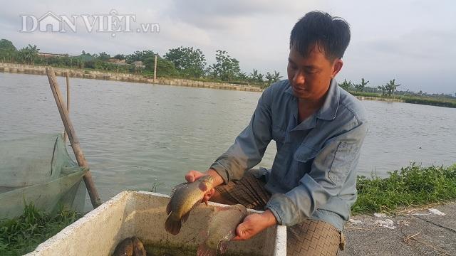 Làm giàu ở nông thôn: Nuôi đàn cá rô khổng lồ, lãi 400 triệu/năm-1