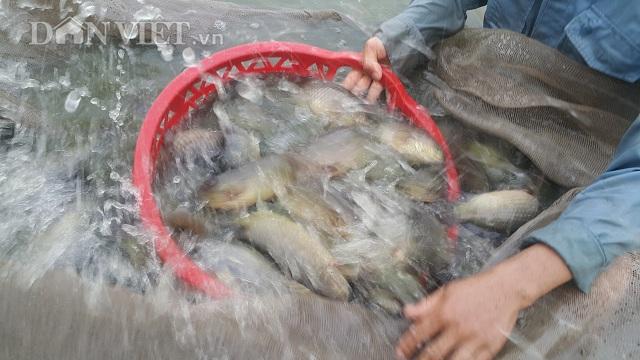 Làm giàu ở nông thôn: Nuôi đàn cá rô khổng lồ, lãi 400 triệu/năm-4