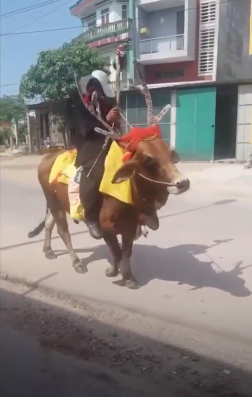 Quảng Trị: Thanh niên độ bò thành tuần lộc rồi ung dung dạo phố-1
