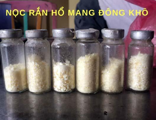 Người đàn ông đầu tiên bắt rắn độc nhả ra... vàng 9999 ở Việt Nam-3