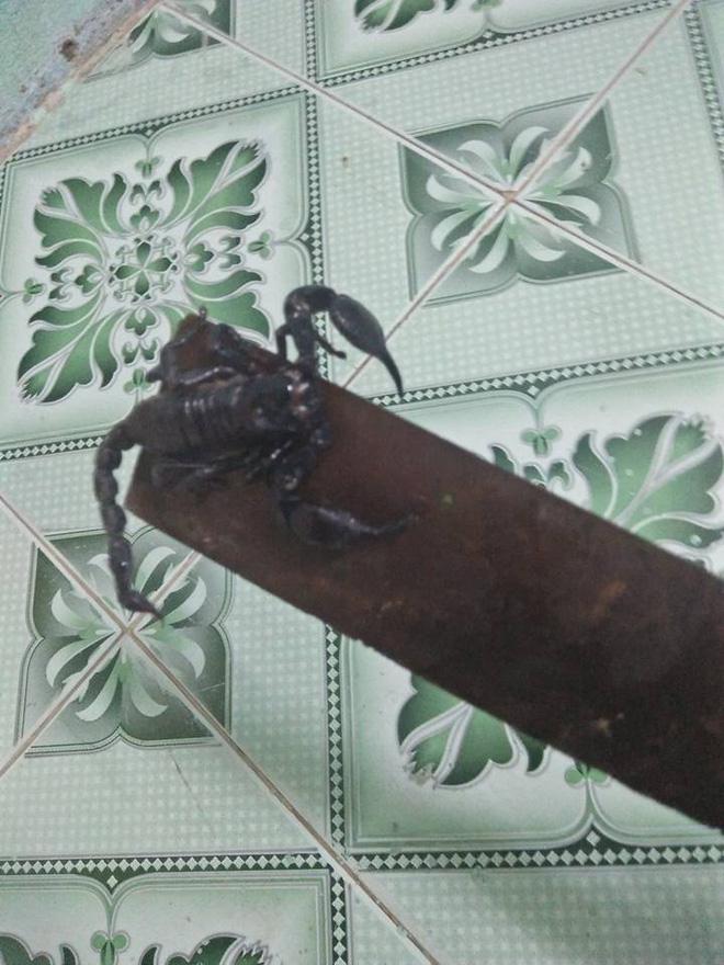 Bé 1 tuổi khóc thét, mẹ thất kinh khi nhìn thấy bọ cạp còn sống ngay cạnh con mình-3