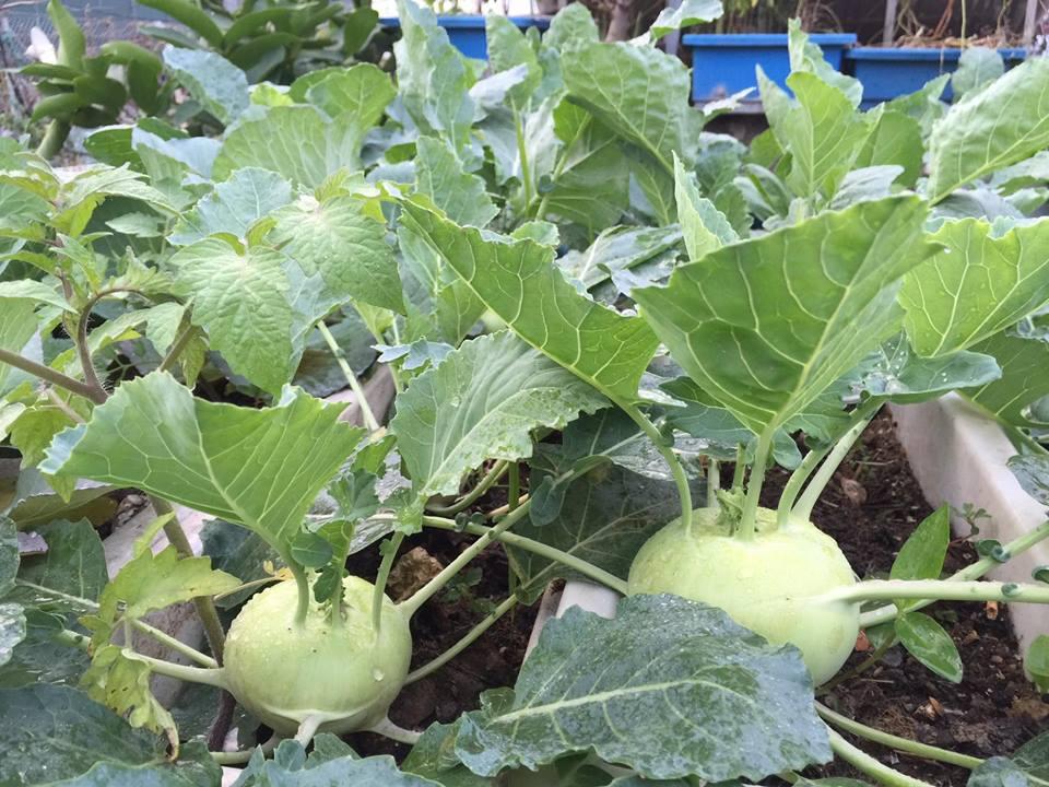 Ngưỡng mộ bà mẹ Hà thành trồng rau, nuôi chim gà trên sân thượng-7