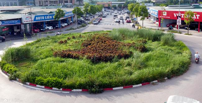 Ảnh: Cỏ mọc um tùm biến ngã tư ở Hà Nội thành vườn hoang-1