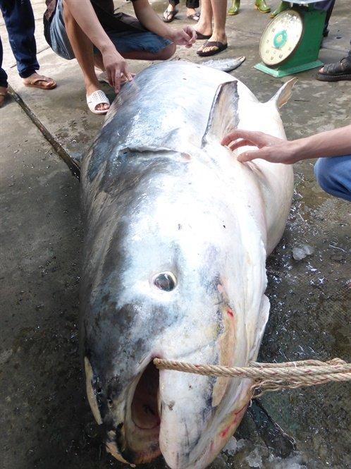 Thủy quái Vàm Nao và giai thoại loài cá giá bán chục cây vàng-1