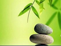 """3 bài học đáng suy ngẫm về thành công rút ra từ """"cuộc đời của cây tre"""""""