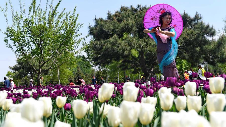 Không cần tới Hà Lan, ngay láng giềng Việt Nam cũng có thiên đường hoa tulip đẹp chất ngất!-8