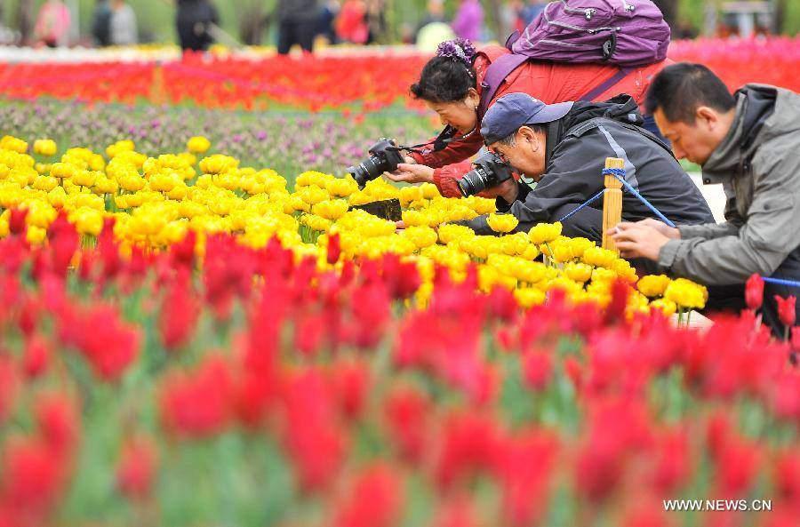 Không cần tới Hà Lan, ngay láng giềng Việt Nam cũng có thiên đường hoa tulip đẹp chất ngất!-15