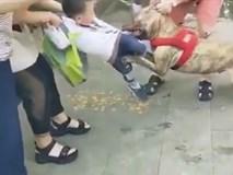 Chó Pit bull ngoặm chặt hàm răng sắc nhọn vào chân cậu bé 4 tuổi