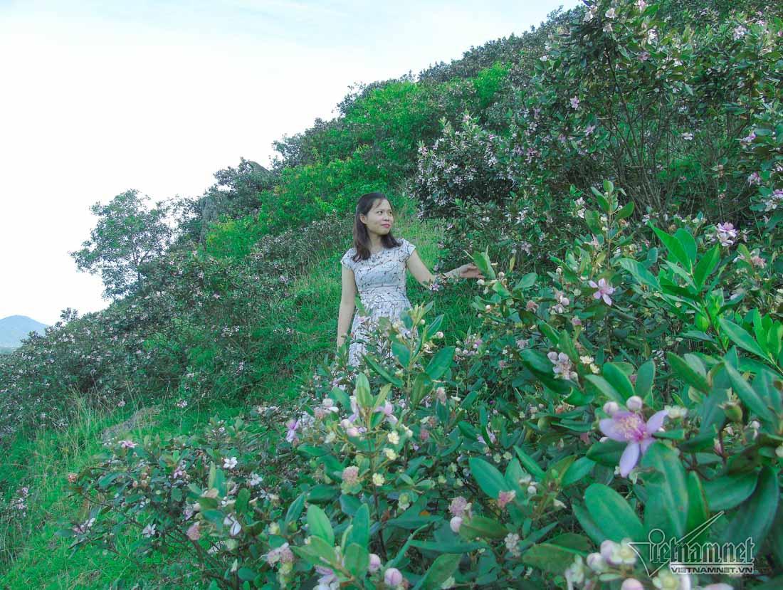 Đồi sim tím lịm bậc nhất xứ Nghệ: Dân teen đổ xô seo phì giữa nắng-5