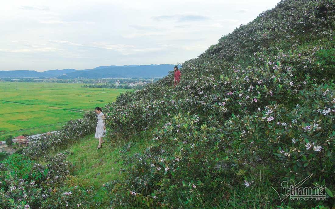 Đồi sim tím lịm bậc nhất xứ Nghệ: Dân teen đổ xô seo phì giữa nắng-7