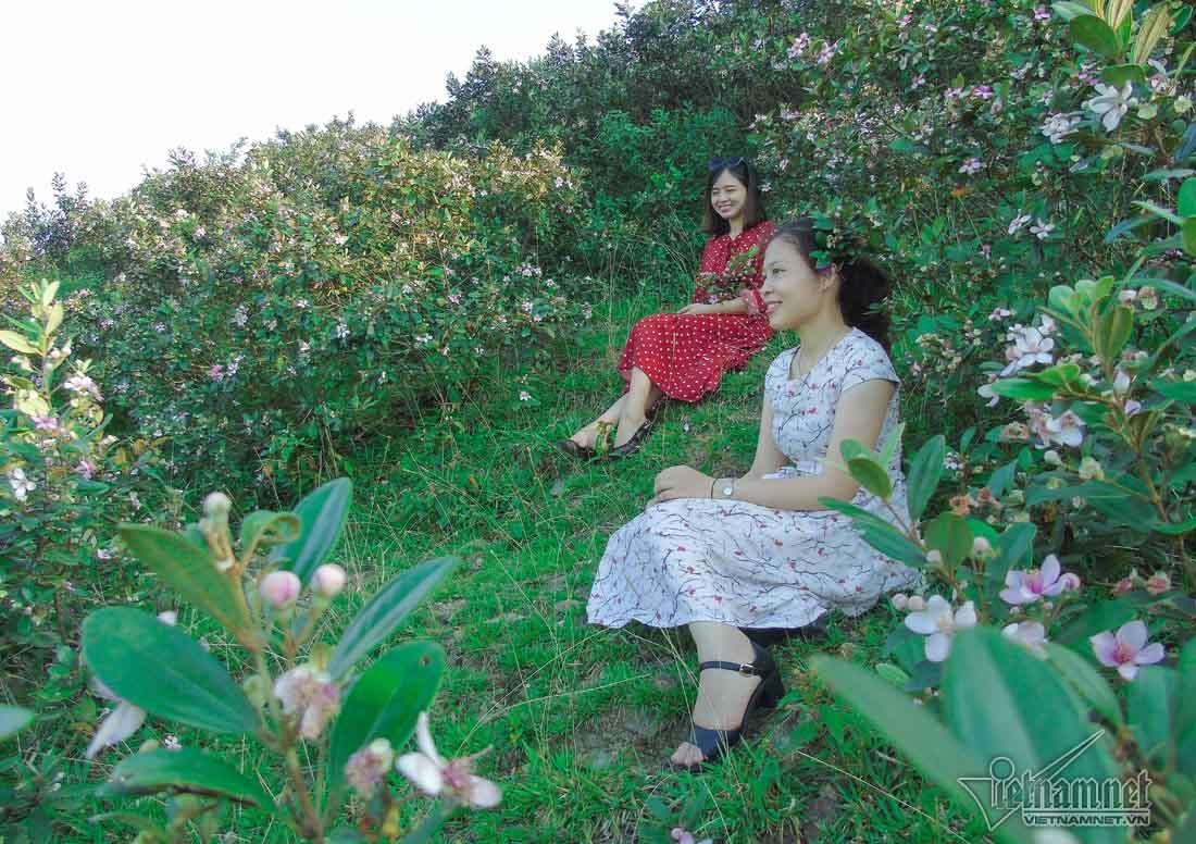Đồi sim tím lịm bậc nhất xứ Nghệ: Dân teen đổ xô seo phì giữa nắng-10