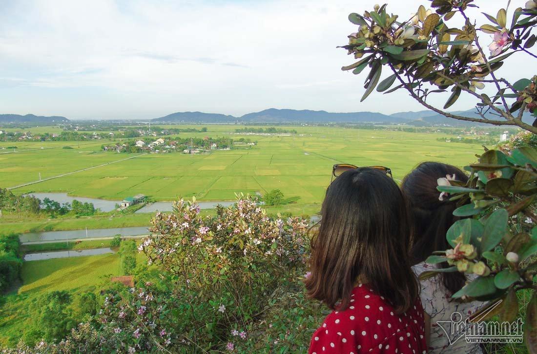 Đồi sim tím lịm bậc nhất xứ Nghệ: Dân teen đổ xô seo phì giữa nắng-12