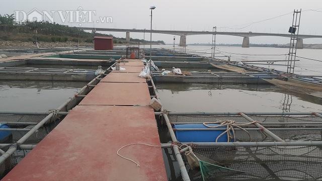 Gã khùng bỏ chức Thanh tra về nuôi cá lăng sông, lãi 300 triệu đồng-4