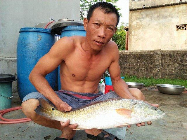 Bắt được cá lạ vảy vàng óng 3,5kg nghi cá sủ vàng quý hiếm-1